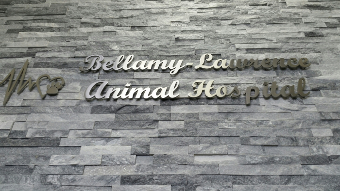 Stainless steel 3D cut letters Animal Clinic
